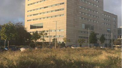 Denuncian el estado de degradación de los alrededores del Palau del Congressos de Palma