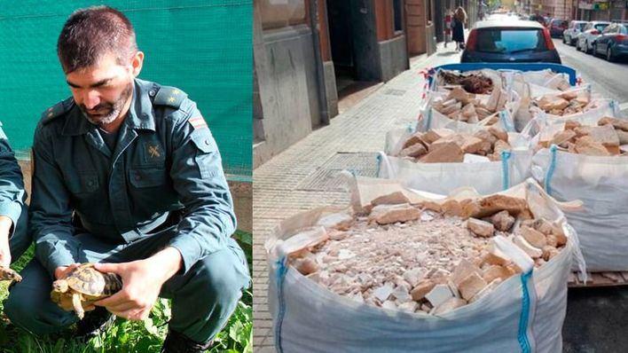 El teniente del Seprona sujeta una de las 1.100 tortugas incautadas en un criadero ilegal de Llucmajor. A la derecha, restos de obra
