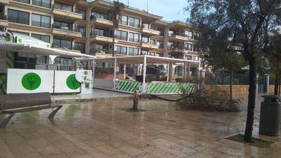 El fuerte viento provoca la caída de diversos árboles en siete puntos de Palma