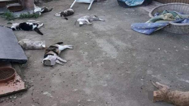 Matan a golpes a nueve gatos de un refugio de Alicante