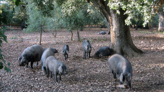 Destinan 2.900.000 euros del ITS en ayudas para el mantenimiento del paisaje agrario de Baleares