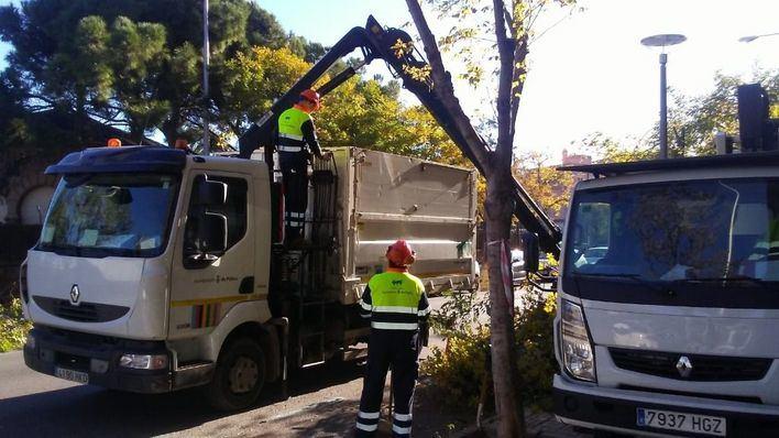Cort talará cuatro árboles de Es Fortí ante su riesgo de caída