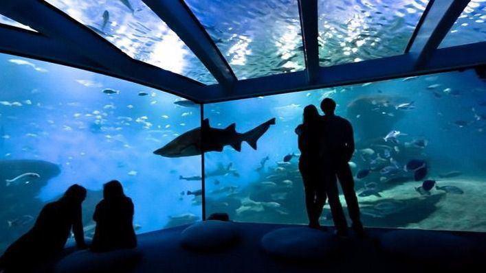 Palma Aquarium estrena pista de hielo para estas Navidades