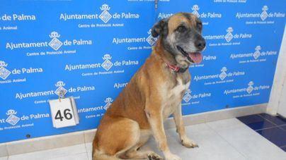 Cort pide a los grupos parlamentarios modificar la ley de animales