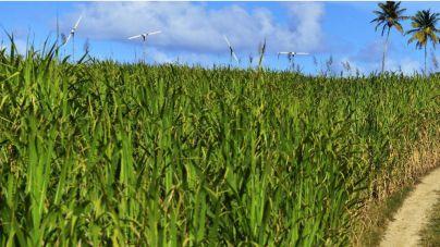 Isla Mauricio ya genera electricidad gracias a sus cañas de azúcar
