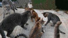 Los gatos del Estadi Balear buscan voluntarios que les decoren sus nuevos iglús