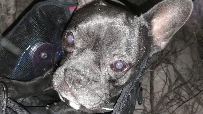 El feliz rescate de un perrito que cayó en un pozo de Son Quint