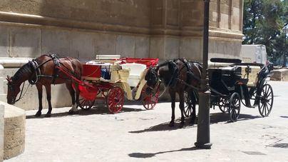 Actúa Baleares pide cambiar las galeras por vehículos eléctricos