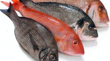 Desarrollan un sistema para medir el pescado con inteligencia artificial