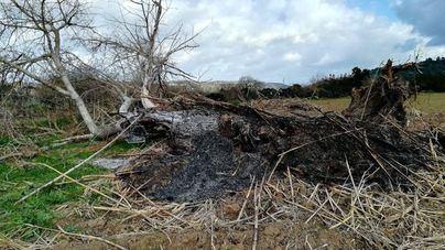 Terraferrida critica a Medi Ambient: 'en lugar de proteger' los bosques de ribera 'los destroza'
