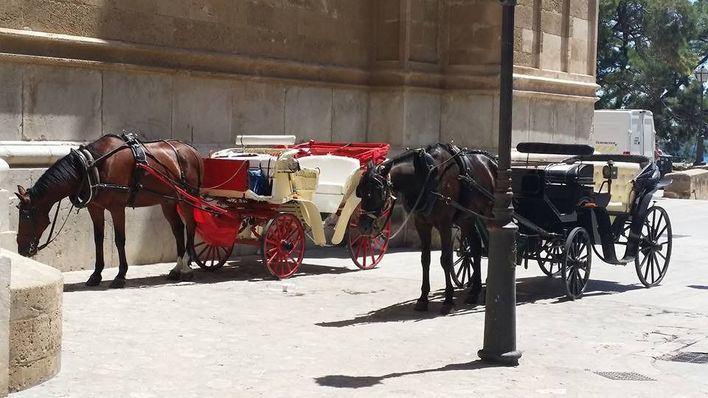 Actúa Palma propone que las galeras de caballos se sustituyan por vehículos eléctricos