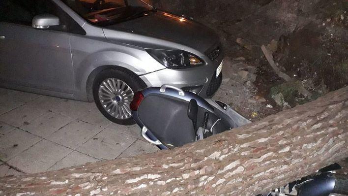 56 incidentes en Baleares por el temporal, la mayoría por caídas de árboles y desprendimientos