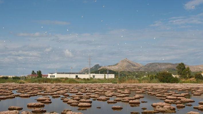 """El GOB reconoce """"avances"""" en la protección de zonas húmedas"""