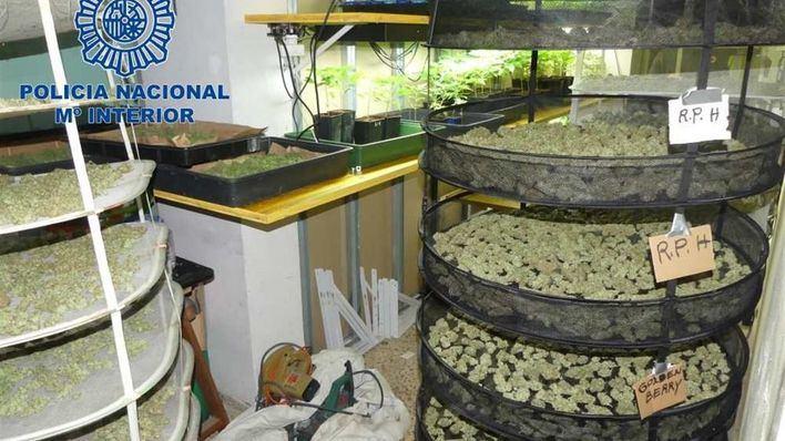 Cuatro detenidos en Ibiza por gestionar una plantación de marihuana
