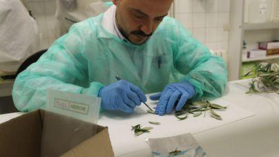 La Conselleria de Medi Ambient está estudiando la expansión de la bacteria
