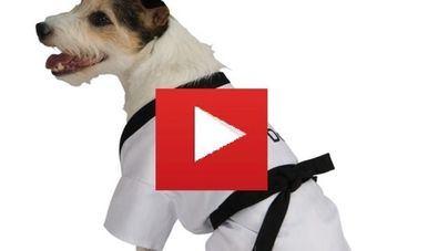 El perro es el mejor amigo del hombre... Y del Kung Fu