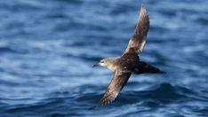Medio Ambiente sitúa nuevas Zonas de Especial Protección para las Aves