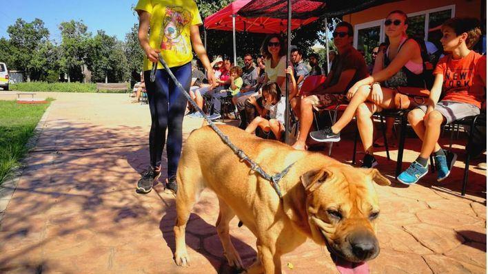 Nuevo desfile en Son Reus de perros en riesgo de sacrificio