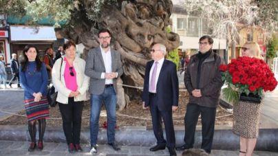 Homenaje al empresario que donó el olivo de Cort de 600 años