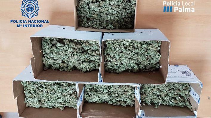 Detenidas dos okupas en Palma con más de seis kilos de marihuana