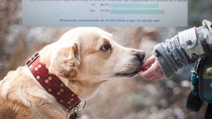 Los lectores no apoyan la medida de Cort de limitar el número de mascotas en pisos