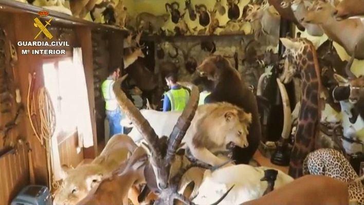 Detenido un mallorquín que lideraba una red de comercio ilegal de animales protegidos