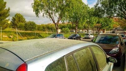 El polen invade Mallorca y el cielo no ayuda: Ya son 36 días sin lluvia