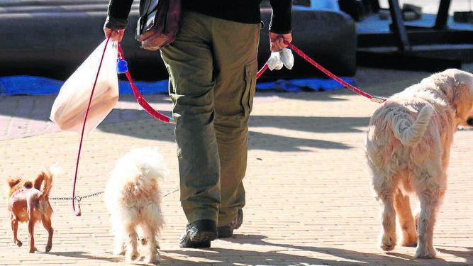 Actúa solicita a Cort que no apruebe la ordenanza sobre animales por falta de consenso