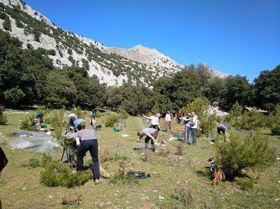 Amics de la Terra celebra su 25 aniversario con el proyecto de reforestación de Son Torrella