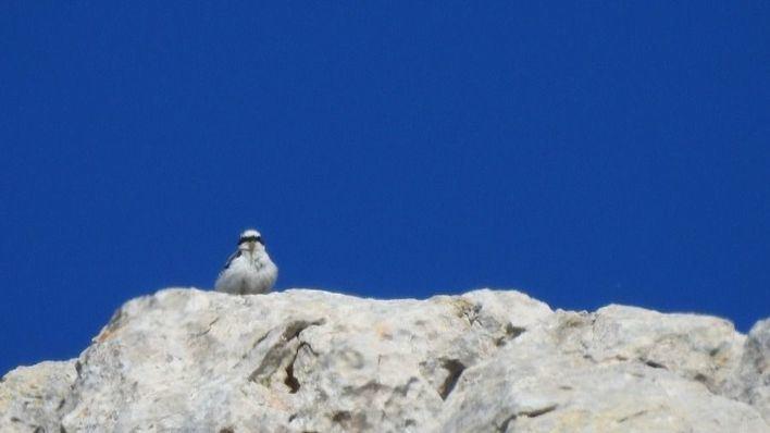 Seis especies de aves conviven en zonas protegidas de la Serra
