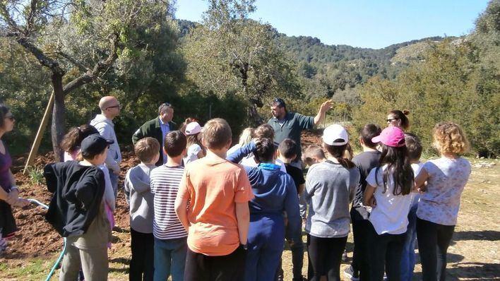 Estudiantes de Calvià crean un santuario para las abejas en Galatzó