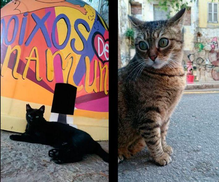 Luz verde de Cort a los proyectos para gatos y Son Gotleu de los Presupuestos Participativos