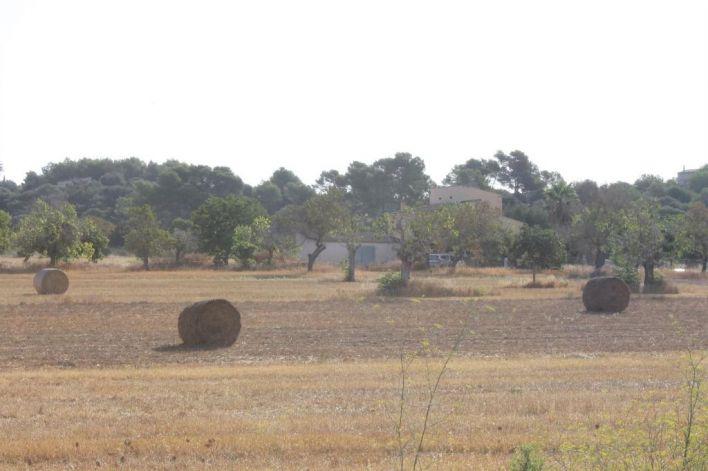 Asaja pide una reunión urgente para tratar los 'importantes daños' de la sequía