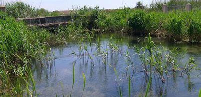 El Parque de s'Albufera ampliará un 20 por ciento su superficie protegida