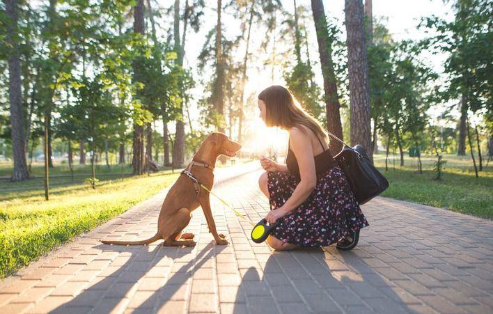 Organizan un paseo canino solidario en Calvià