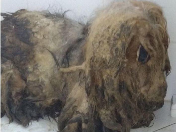 La Guardia Civil halla a un vecino de Andratx muerto en su piso y sus siete perros en mal estado