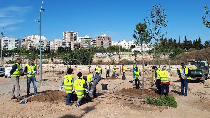 Vecinos de Palma plantan árboles en el bosque urbano del canódromo