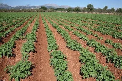 Asaja exige eliminar las limitaciones urbanísticas en las instalaciones agrarias