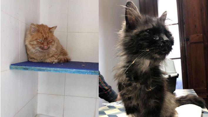 Voluntarios denuncian mala praxis en la atención de gatos en Son Reus