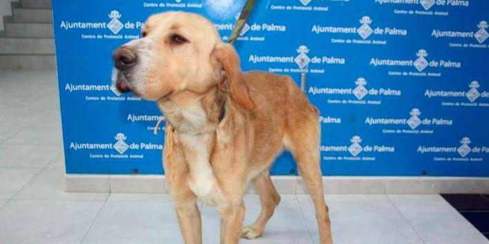 Todos los partidos, menos PSIB y Més, debatirán sobre bienestar animal en Palma