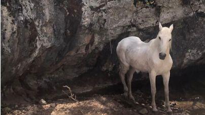 Rescatan un caballo atrapado en las cercanías del Torrent de Pareis