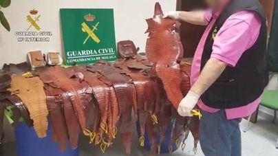 Recuperan del tráfico ilícito 627 ejemplares vivos de reptiles