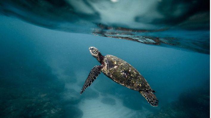 Proteger el medio marino, consumo responsable y turismo sostenible centrarán el