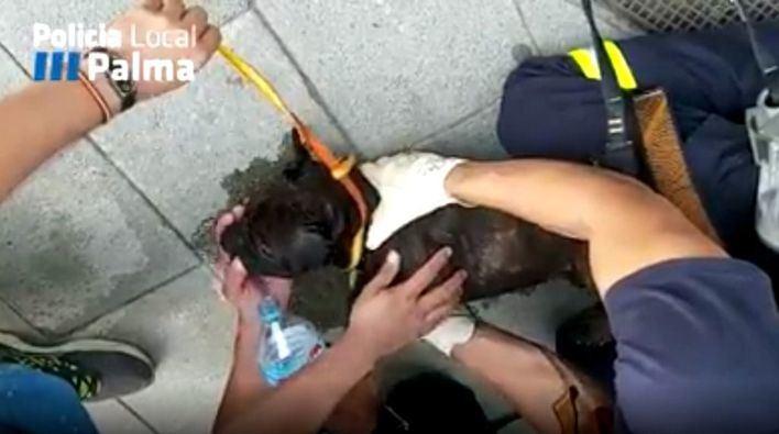 Rescatan de un balcón en Palma a un perro con síntomas de haber sufrido un golpe de calor