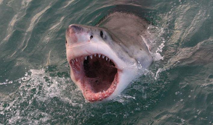 Un tiburón blanco mata a una mujer en Bahamas
