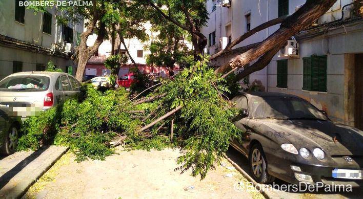 Cuatro coches afectados por la caída de ramas en el barrio de Corea
