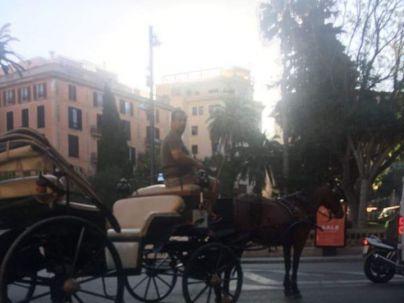 Actúa denuncia las amenazas de un conductor de calesa a una ciudadana de Palma