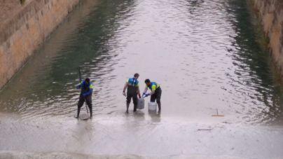 El GOB urge a Emaya a controlar los plaguicidas que acaban en el mar desde Sa Riera