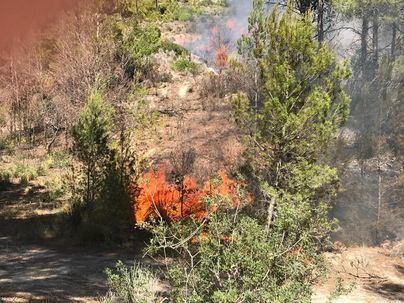 Cuatro incendios forestales en un solo día generan alarma en Mallorca