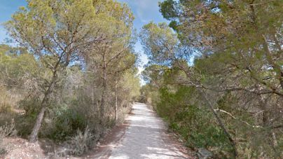 Sant Antoni constata el uso de barbacoas en los asentamientos ilegales de su zona boscosa